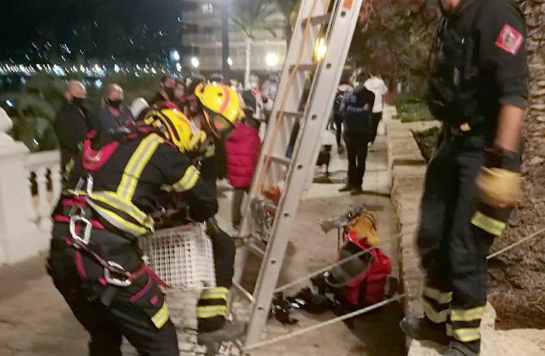 Dulce rescate de los bomberos de Benidorm