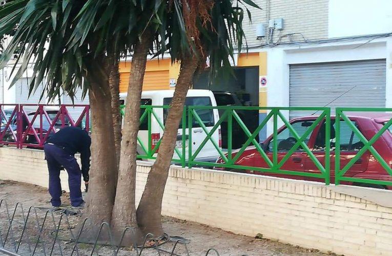 El Ayuntamiento de Villajoyosa comienza los arreglos de mejora en el parque Botánico